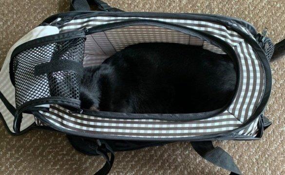 pet-carry-back-nekoichi